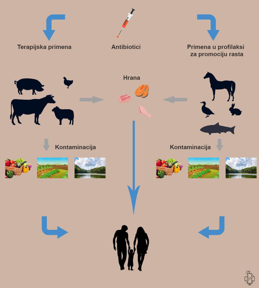 rezistencija bakterija, mrsa, multirezistentne bakterije, bakterije, vrse, mdr, antibiotici, terapija, kontaminacija, farma, poljoprivreda, preantibiotska era,