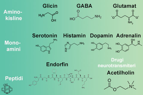 neurotransmiteri, monoamini, aminokiseline, gaba, glicin, dopamin, serotonin, histamin, adrenalin