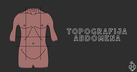 abdomen, topografija, anatomija, studiranje, anatomija abdomena, epigastrijum