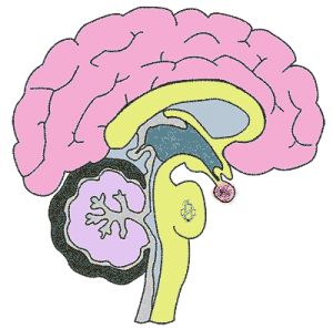 neurologija, klinicka neurologija, centralni nervni sistem, nervni sistem, klinika, simptomi