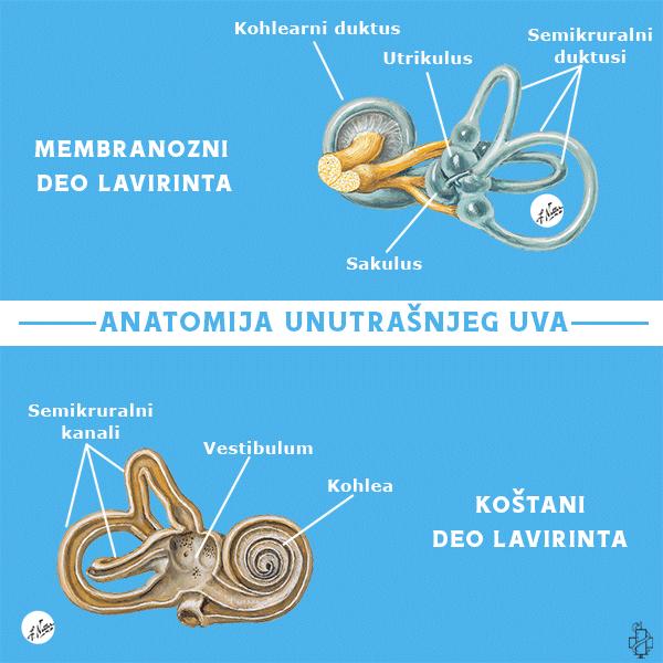 manijerova bolest, manierova bolest, anatomija uha, utrikulus, sakulus